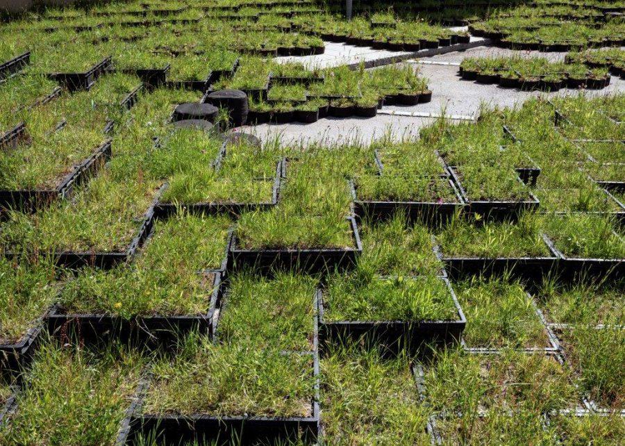 Terrassodling av gräs vid asfalt