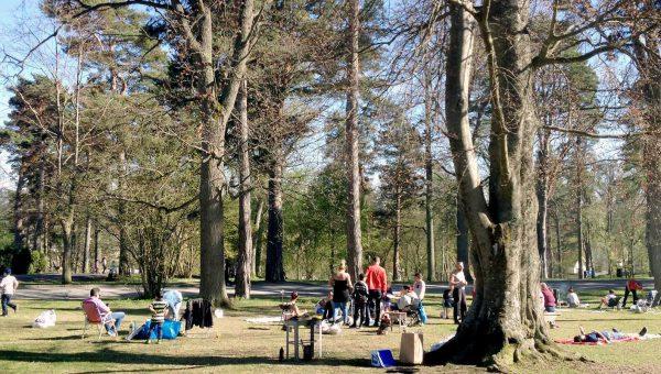 Ett antal människor som befinner sig bland stora träd