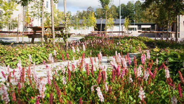En blommande park, en gångväg syns mellan blommorna