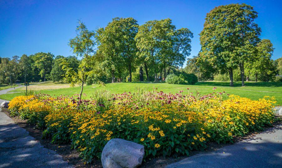 En grönskande park